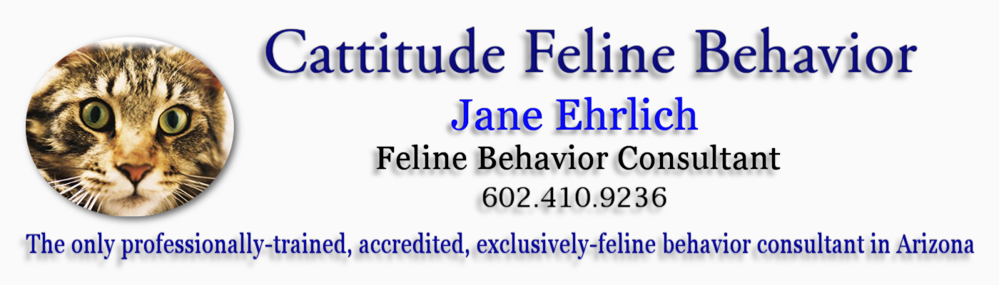 www.cattitudebehavior.com